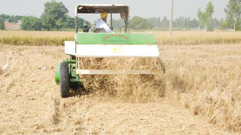 Most farmers in Punjab use combine harvesters for paddy harvesting