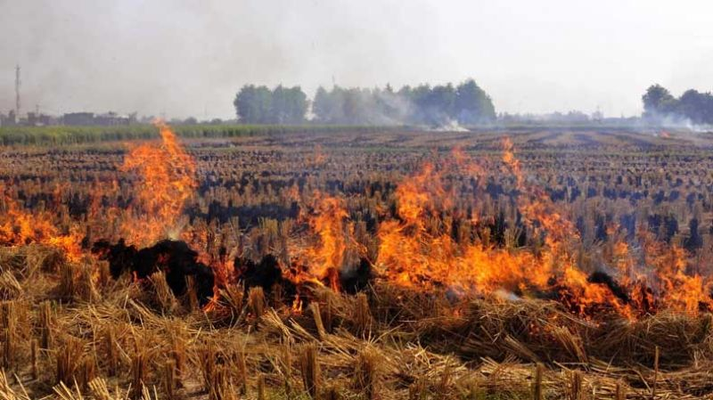 Farmers will burn the stubble if they do not get the equipment