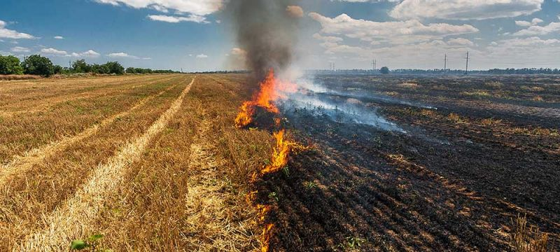 Paddy Residue Burning