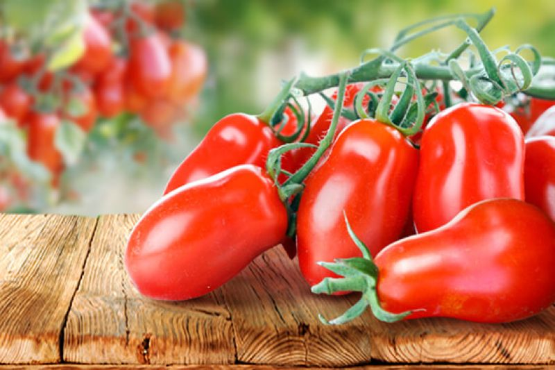 San Marzano and Corbarino tomatoes inhibit the growth and cloning behavior of malignant cells
