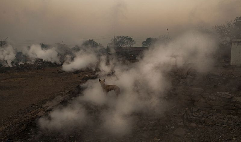 Delhi authorities have stepped up efforts to combat pollution