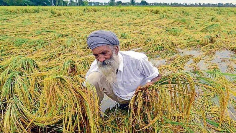 farmers,hevay rainfall