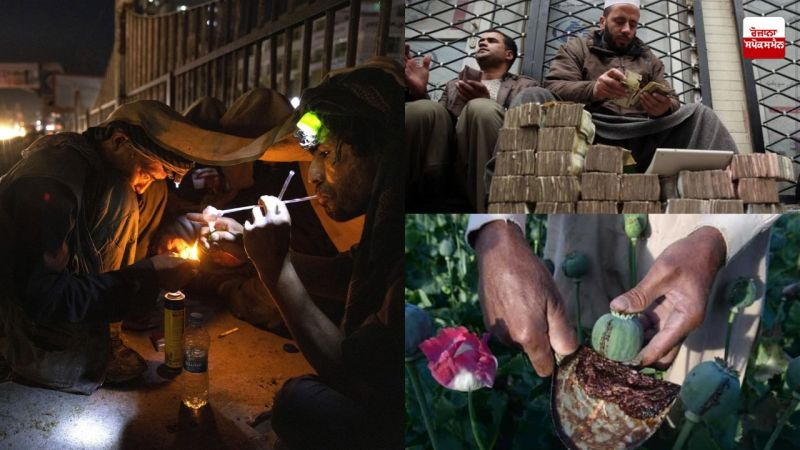 Taliban's production and consumption of drugs