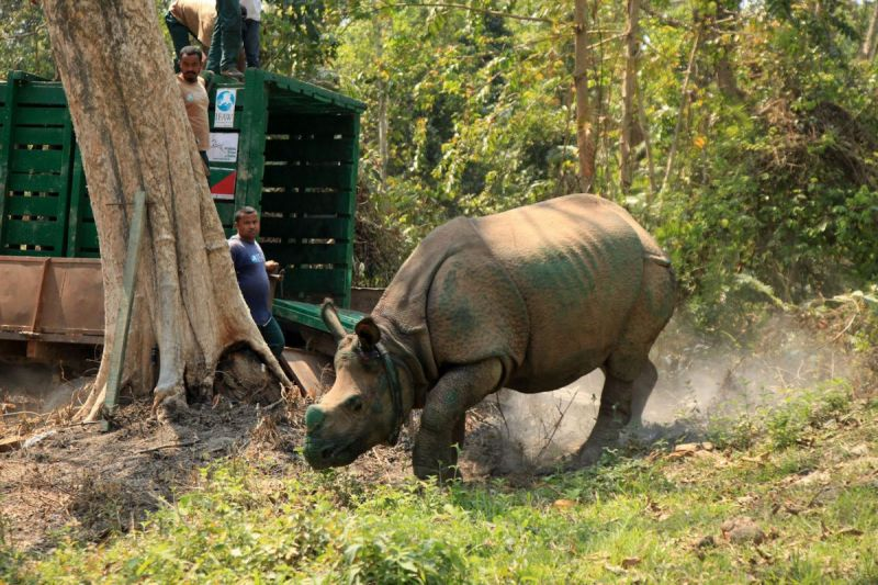 90 appointed in Assam rhino protection force