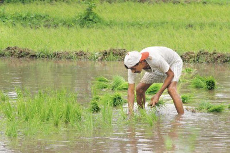 Farm loan waivers