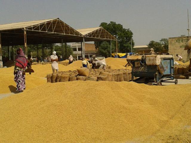Punjab Vigilance to monitor paddy procurement in anaj mandis